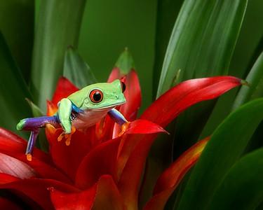 FrogsCh1-04__Frogscapes346_Cuchara_6899_021014_131003_5DM3L