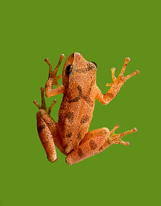 FrogsCh1-11__Frogscapes060_Cuchara_7415f_071513_144233_5DM3L