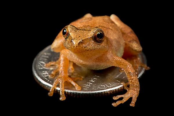 FrogsCh1-14__Frogscapes340_Cuchara_9235b_071713_223154_5DM3L