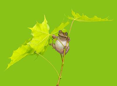 FrogsCh1-21__Frogscapes741_Cuchara_5323_062514_191338_5DM3L