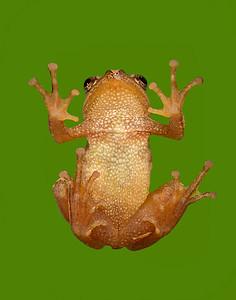 FrogsCh1-10__Frogscapes059_Cuchara_7384_071513_143833_5DM3L