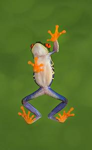 FrogsCh1-07__Frogscapes011_Cuchara_9739c_121116_185142_5DM3L
