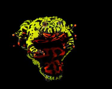 FrogsCh1-05P__Frogscapes088L_Cuchara_4930AM_080113_174314_5DM3L