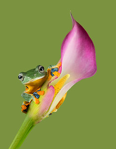 FrogsCh1-08__Frogscapes002_Cuchara_1740c_010115_184822_5DM3L