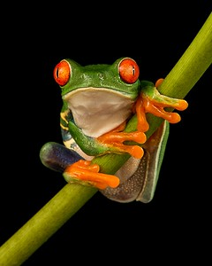 FrogsCh2-01__Frogscapes015_Cuchara_2391b_021117_164332_5DM3L