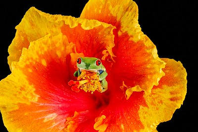 FrogsCh2-19__Frogscapes323_Cuchara_5207_081512_211342_7DL