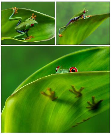 FrogsCh2-01B__REGTR-1