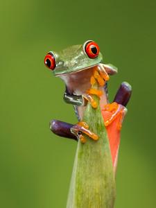 FrogsCh2-16__Frogscapes592_Cuchara_0871_072013_210822_5DM3L