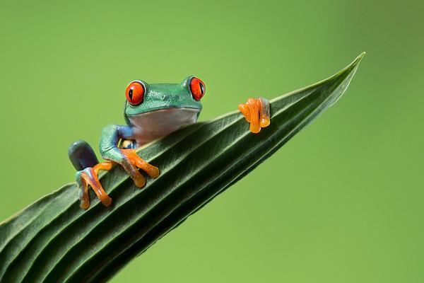 FrogsCh2-18__Frogscapes654_Cuchara_6804b_060314_180528_5DM3L-1