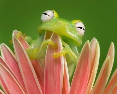 FrogsCh3-21__Frogscapes760_Cuchara_5569c_042114_151006_5DM3L