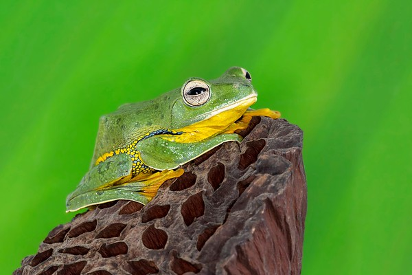 Frogscapes661_Cuchara_8066_100714_122320_5DM3L