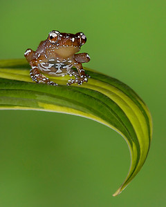 Frogscapes196p_Cuchara_stacked1