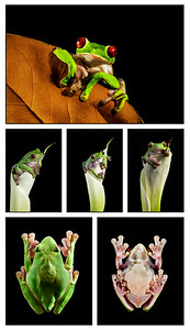 FrogsCh3-11__other frogs1