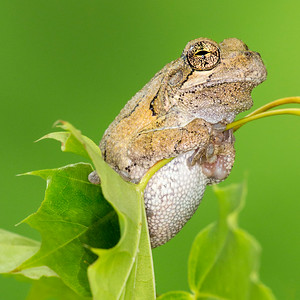Frogscapes748_Cuchara_5426_062514_192642_5DM3L