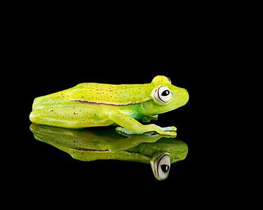 FrogsCh3-20P__Frogscapes693_Cuchara_1872_041814_180915_5DM3L