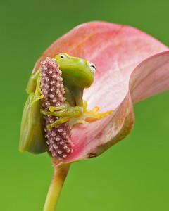 FrogsCh3-17__Frogscapes423_Cuchara_5620_052014_112748_5DM3L