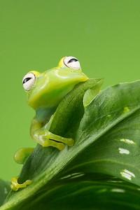 FrogsCh3-16__Frogscapes102_Cuchara_5595b_052014_112309_5DM3L