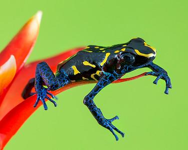 FrogsCh4-17P__Frogscapes699_Cuchara_2607_022014_191350_5DM3L