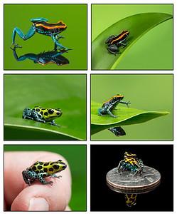 FrogsCh4-01__Darts-1