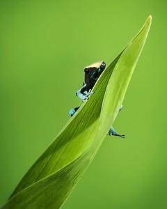 FrogsCh4-22__Frogscapes360_Cuchara_7074_021014_140710_5DM3L
