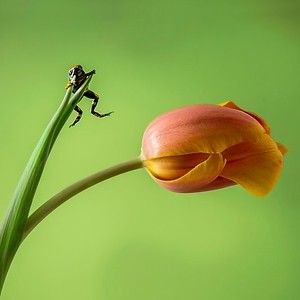 Frogscapes394_Cuchara_7552_021014_155857_5DM3L