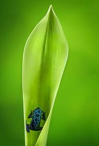 FrogsCh4-24__Frogscapes371_Cuchara_7260_021014_150013_5DM3L