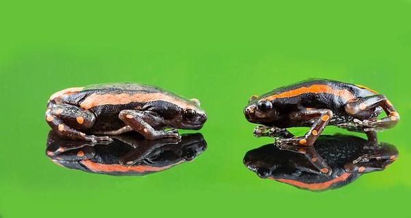 FrogsCh5-22__Frogscapes715_Cuchara_3197_041814_231613_5DM3L