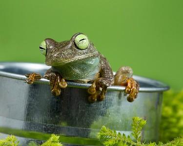 FrogsCh7-07__Frogscapes772_Cuchara_5863_050314_170018_5DM3L