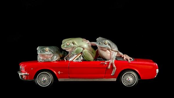 FrogsCh7-14__Frogscapes498_Cuchara_8725_120916_205326_5DM3L