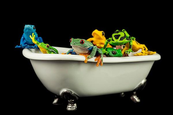 FrogsCh7-03__Frogscapes145_Cuchara_5221_021213_141607_5DM3L