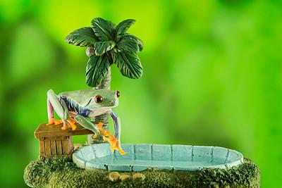 FrogsCh7-05__Frogscapes141_Cuchara_2416_011913_164543_5DM3L
