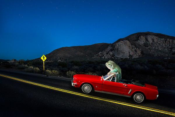 FrogsCh7-16__Frogscapes440_Cuchara_8659 1185_030915_223112_5DM3L