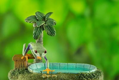 FrogsCh7-06__Frogscapes151_Cuchara_2417_011913_164548_5DM3L