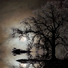 Frosty Moon Rise