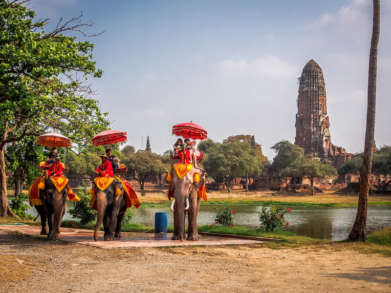Elephants near Wat Phra Ram, Ayutthaya, Thailand