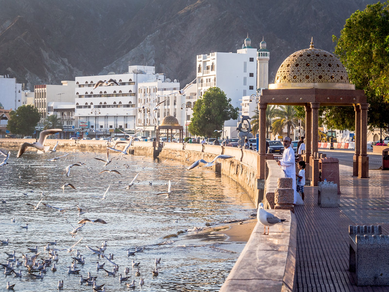 Birds along the Muttrah Waterfront, Muscat, Oman