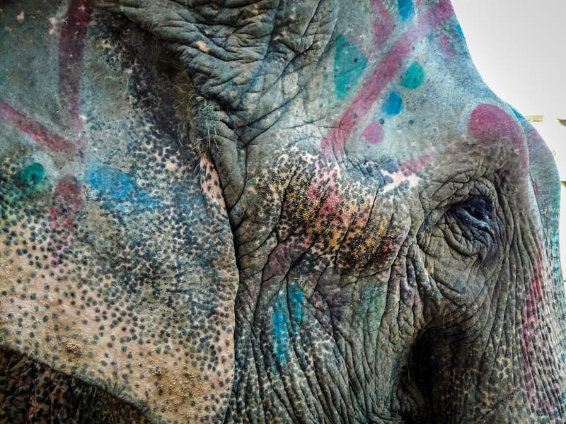 Elephant Eye, Ahmedabad