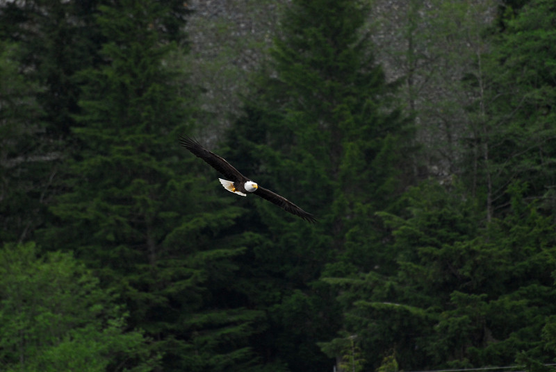 """You'd be a poorer man if you never saw an eagle fly"" are words from a John Denver hit song. Yes, those who have been fortunate to see this majestic bird in flight cannot express in words the moment."