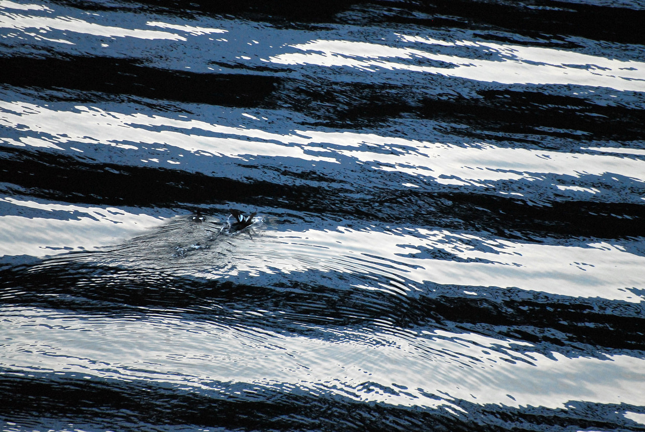 Two water birds flying away from the ship's wake. The interesting thing about this photograph, 3 colors make the photograph... blue, white and black. This is the scene just as it appeared; no photoshop editing here.