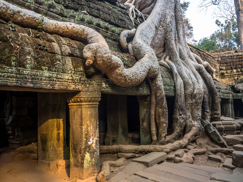 Snake Roots at Ta Prohm, Angkor