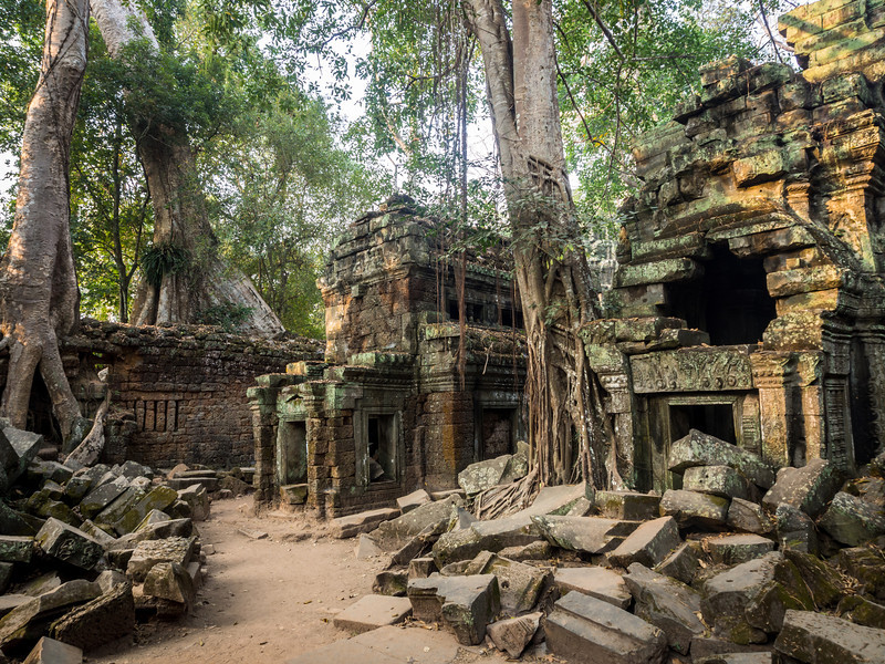 Trees amidst the Ruins, Ta Prohm, Angkor