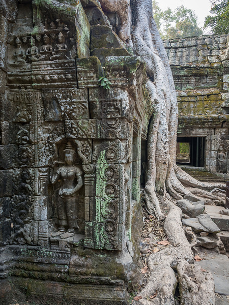 Roots and Reliefs, Ta Prohm, Angkor