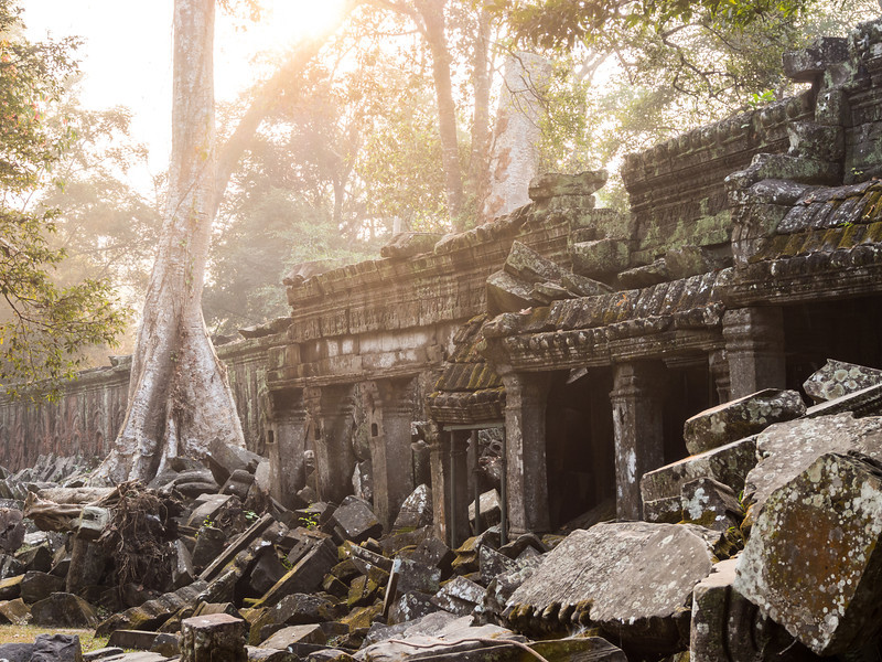 Morning Light on Ta Prohm Walls, Angkor