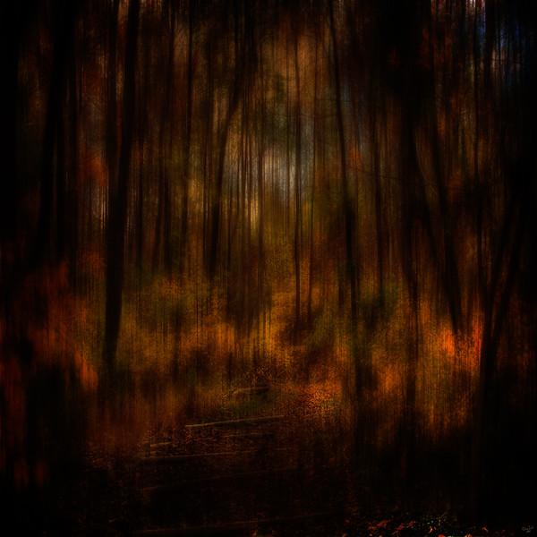 Autumn Glow, Dark Forest Series