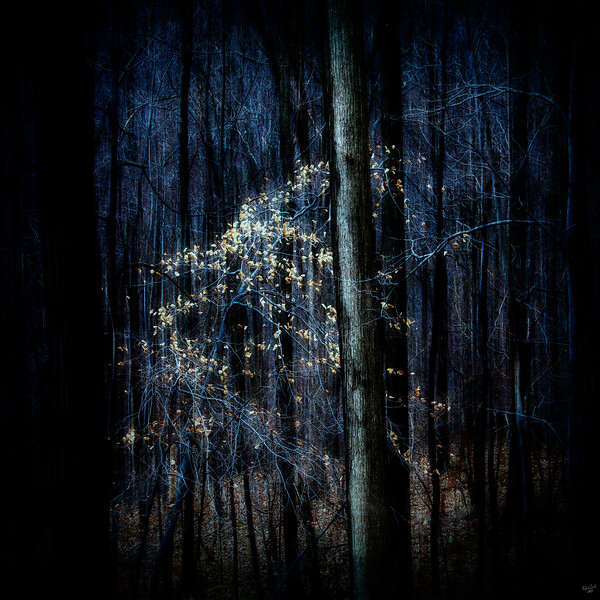 Fall Leaves, Dark Forest Series