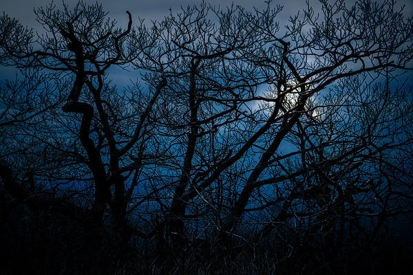 The Woods In Moonlight