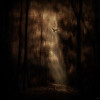 Light On The Path, Dark Forest Series