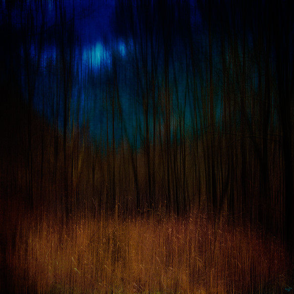 Clearing, Dark Forest Series