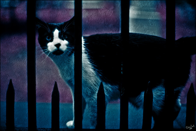 The Cemetery Cat