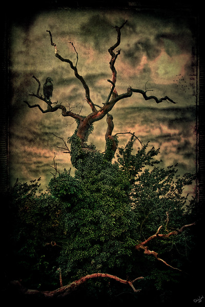 A Raven Sits Waiting, Waiting..............